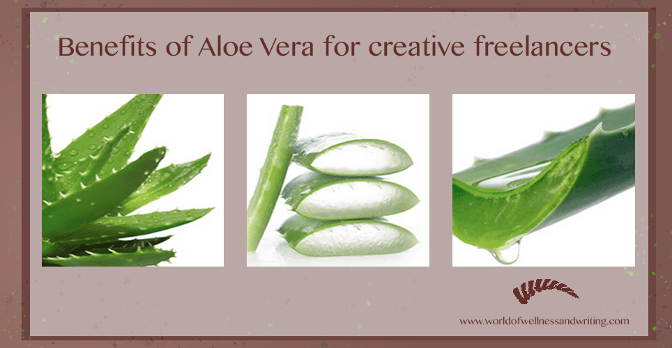 The benefits of aloe vera for creative freelancers